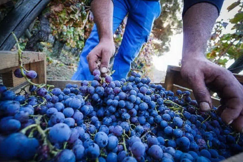 Imprese vitivinicole sarde, contributi per nuovi investimenti
