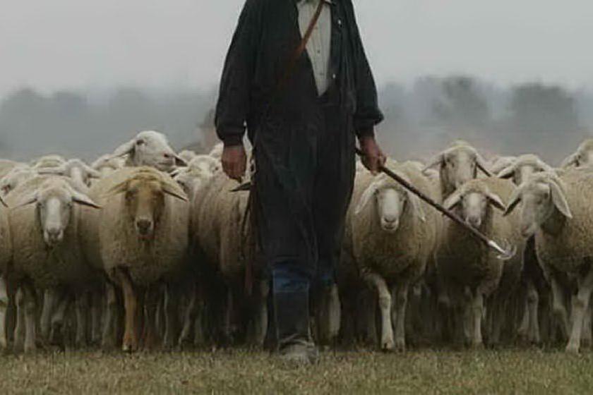 Pastori a 2,7 euro l'ora: imprenditore in manette per caporalato
