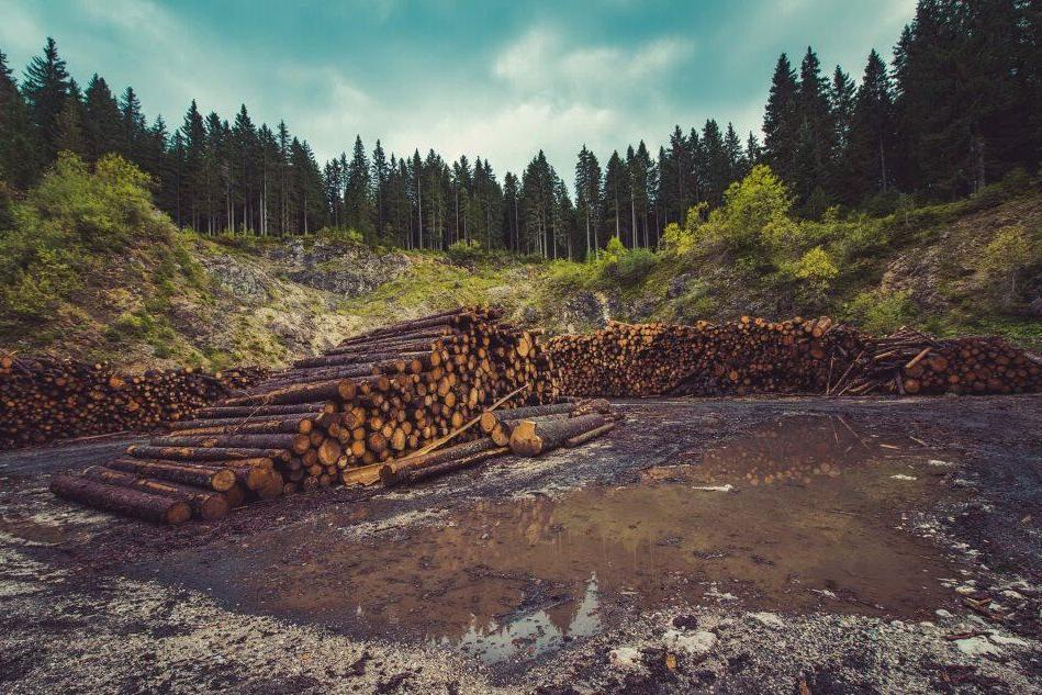 Deforestazione, così il pianeta è più esposto alle pandemie