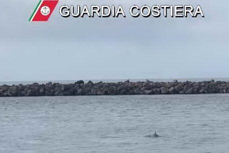 Sorprese da lockdown: un delfino nel fiume Temo
