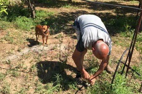 uno dei terreni dove sono state gettate le polpette avvelenate a Santu Lianu (Foto G.Daga)