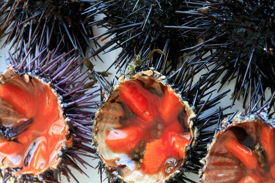 Stop al prelievo dei ricci di mare, il plauso degli ambientalisti