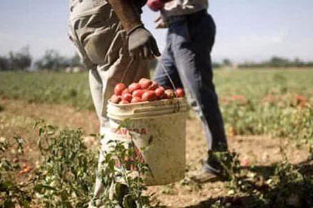 Racket del pomodoro, condanne fino a 12 anni