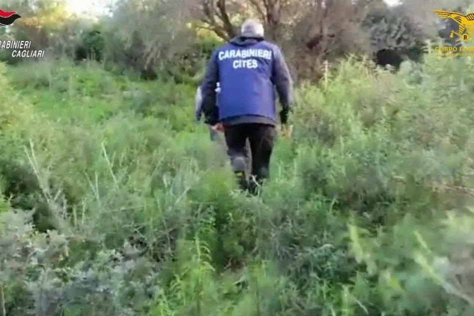 Lotta al bracconaggio in Sardegna