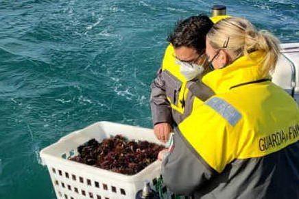 Cagliari, sequestrati tremila ricci di mare