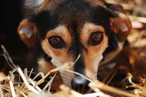 Cani e gatti, nel 2020 boom di adozioni
