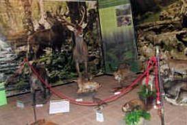 Segariu, la campagna dell'Agenzia Forestas per il rispetto dell'ambiente