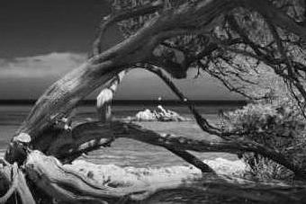 """La storia raccontata dagli alberi: con L'Unione Sarda il viaggio tra i """"patriarchi"""" dell'Isola"""