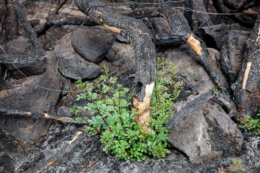 Miracolo verde:così la natura riconquista i suoi spazi