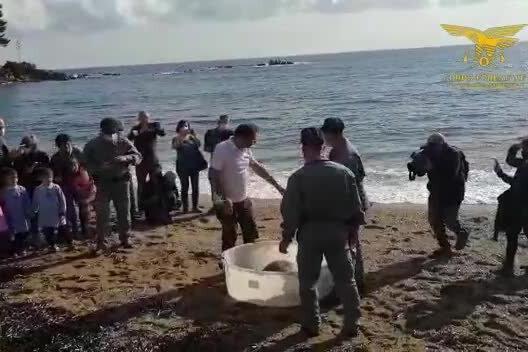 Baunei, la tartaruga Caretta caretta torna in libertà