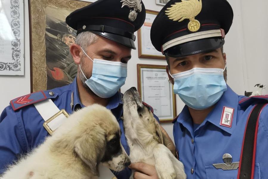 Lega sotto il sole e con le catene due cuccioli di cane:agricoltore denunciato a Mandas