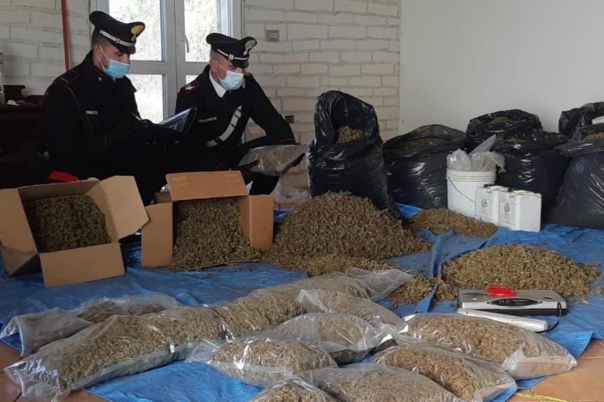 Oltre 35 chili di marijuana nascosti in un casolare: due persone in manette a Villasor