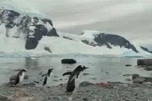 Antartide, lo straordinario documentario realizzato con uno smartphone