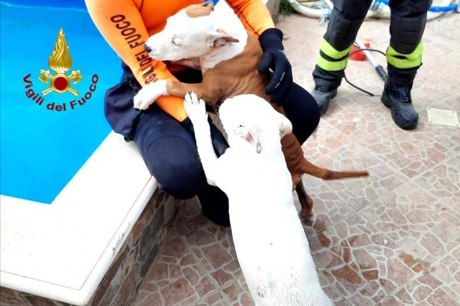 I cani salvati (foto Vigili del fuoco)