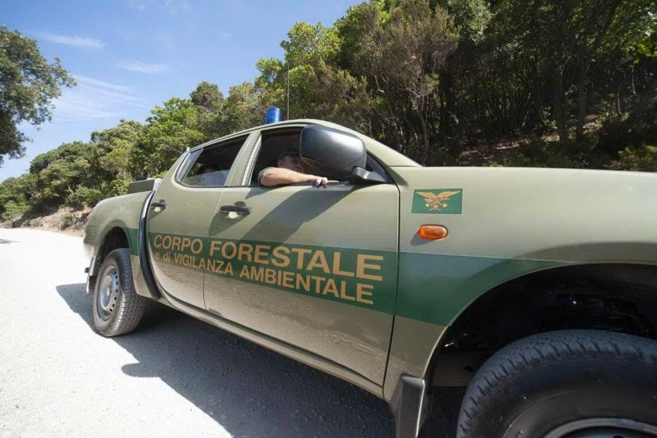 Droga e armi a VillacidroBlitz del Corpo forestale