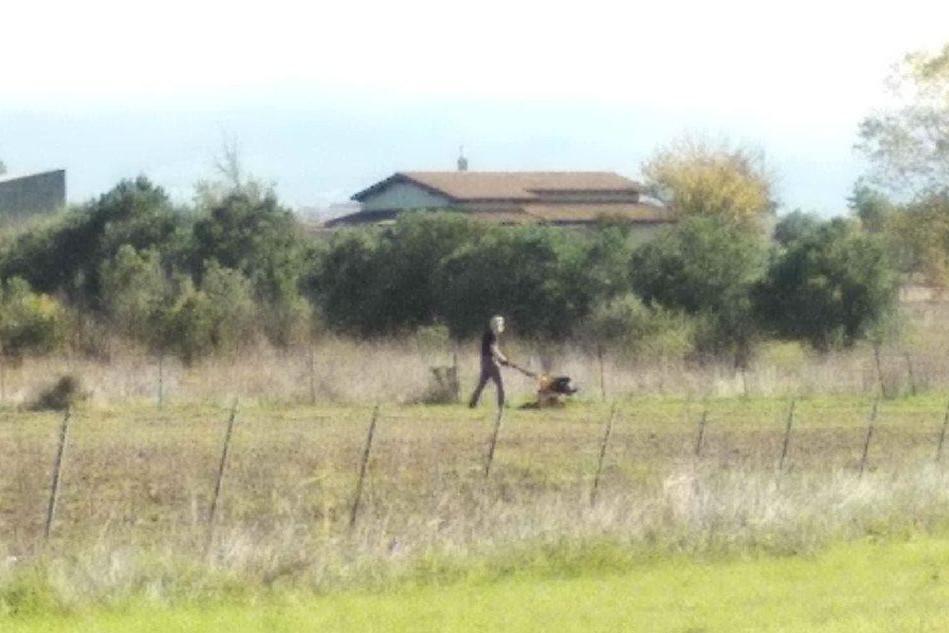 Il pensionato a lavoro in campagna (foto concessa)