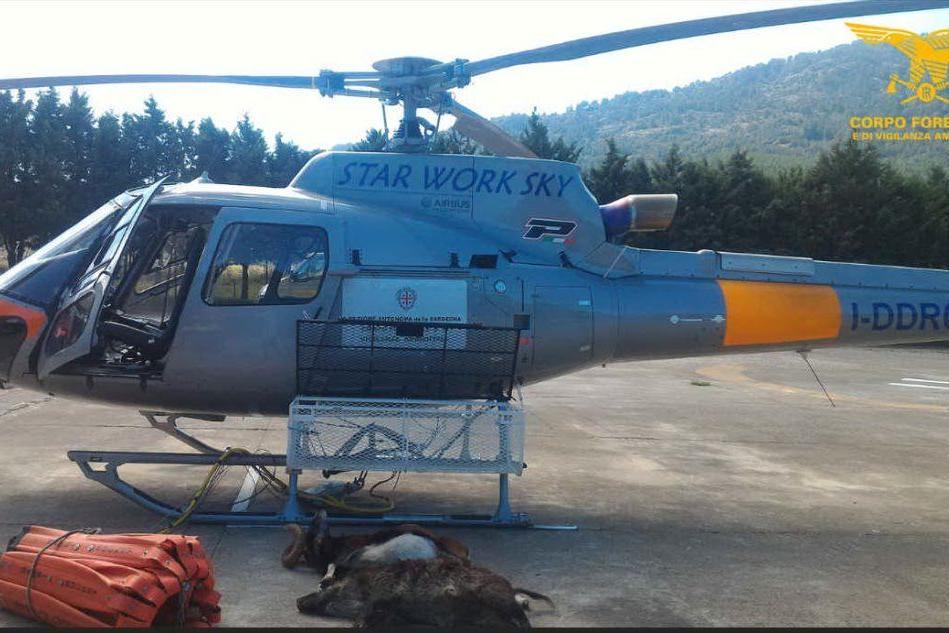 Abbattono un muflone e un cinghiale: Villagrande Strisaili, 9 cacciatori nei guai