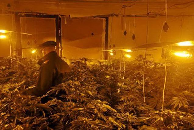 Trasformano un capannone in una serra di marijuana: Uta, due arresti