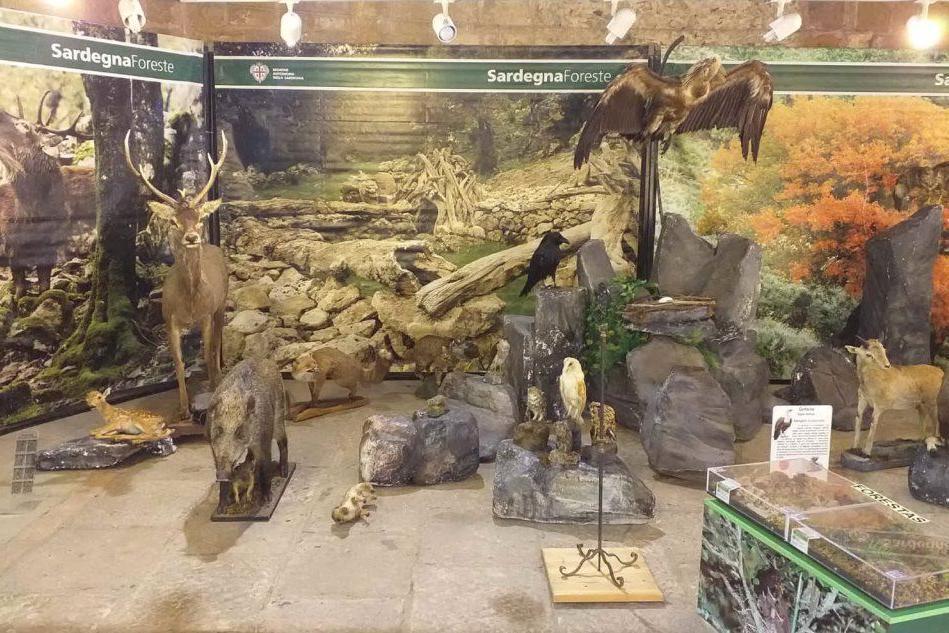 Domusnovas, il patrimonio forestale in mostra