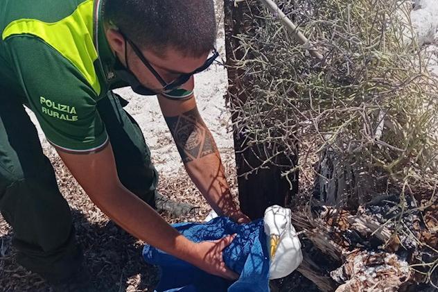 Cabras,i barracelli salvano un gabbiano con un'ala ferita