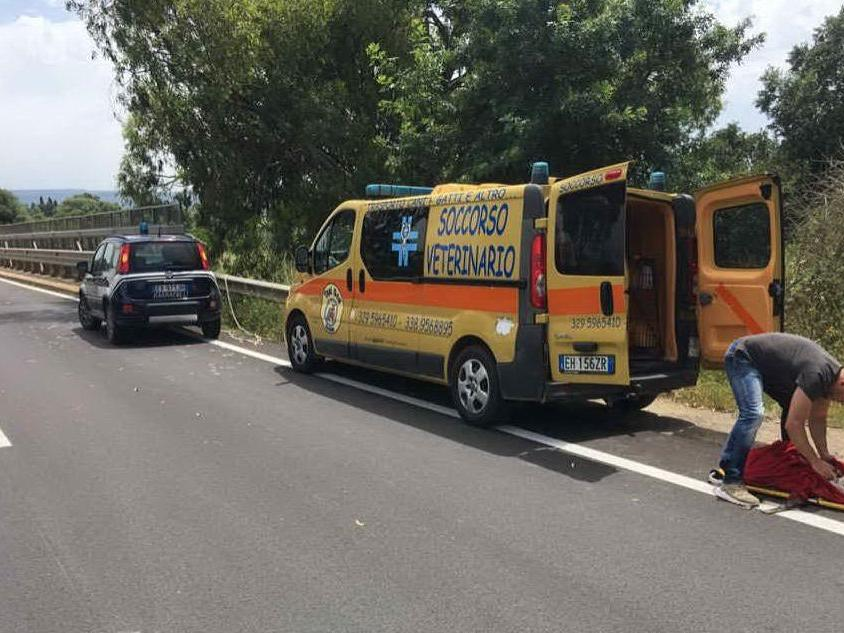 Cane picchiato e gettato da un ponte: è caccia ai responsabili ad Alghero