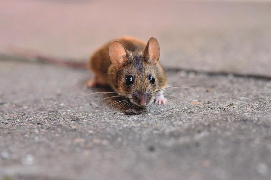"""Un topo morto sul pranzo per i malati, l'Aou: """"In corso tutte le verifiche"""""""