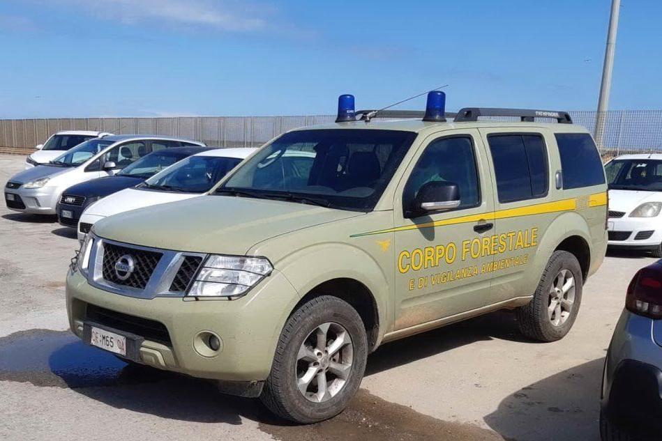 Sardegna, riprendono i controlli del Corpo forestale
