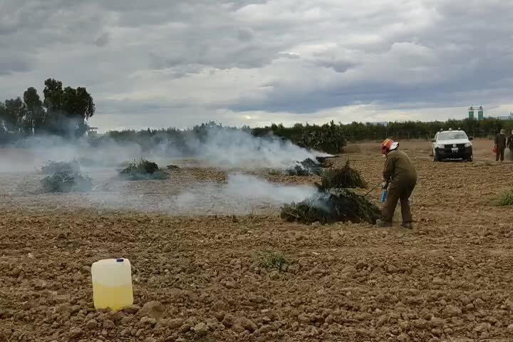 Maxi sequestro di marijuana a Villasor: distrutte 5.300 piante