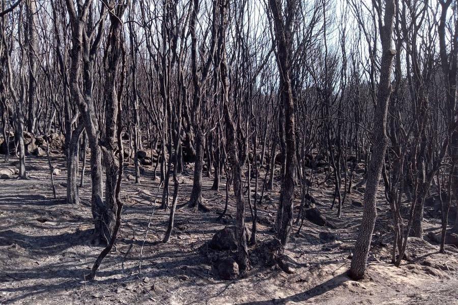 Roghi nell'Oristanese: 238 le aziende danneggiate, ristori per 20 milioni di euro