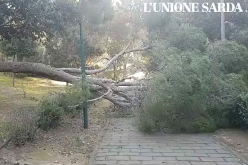 Maltempo, grosso albero cade nel parco di Monte Urpinu