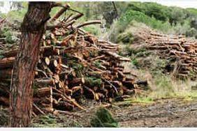 Marina di Sorso, sequestrato un cantiere forestale