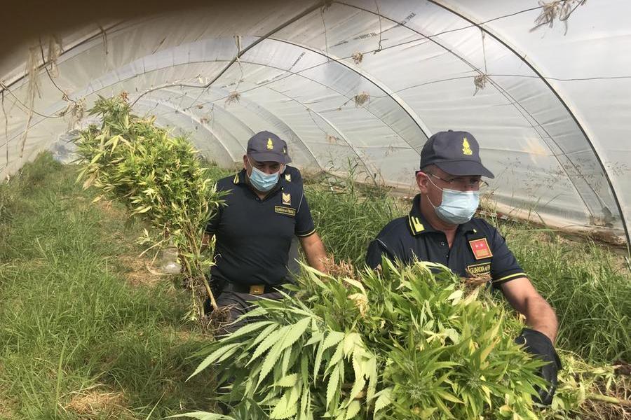 """""""Cosa coltivate qui?"""", """"ortaggi"""": ma i finanzieri non ci cascano e trovano la marijuana"""