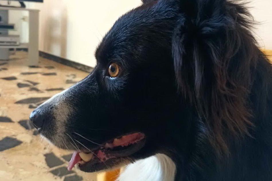 Crocchette avvelenate nelle campagne di Sini, muore un cane