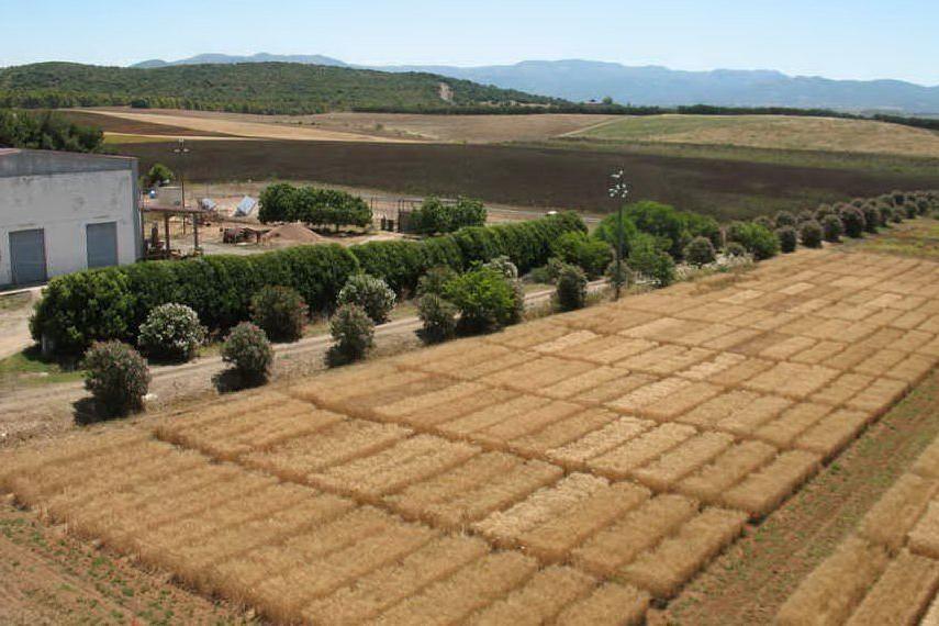 Agris Sardegna, presentate tre nuove varietà vegetali