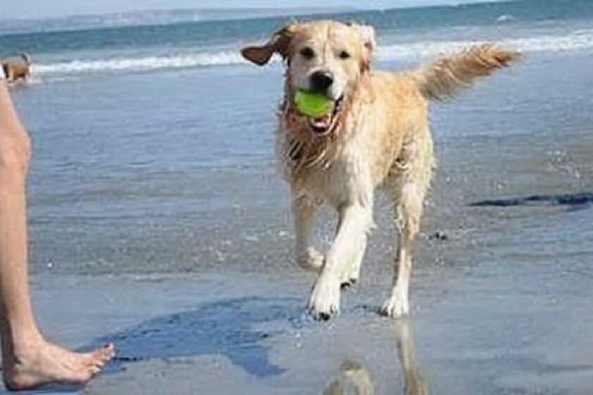 """""""Cani in spiaggia, io dico no"""""""