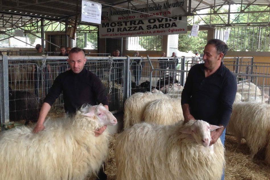 A Macomer la mostra regionale degli ovini dal 10 al 12 maggio