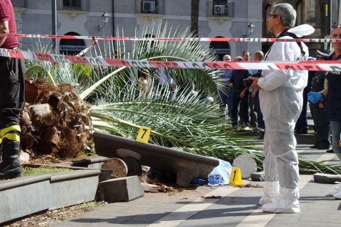 Muore travolta da una palma, scagionato assessore al verde pubblico