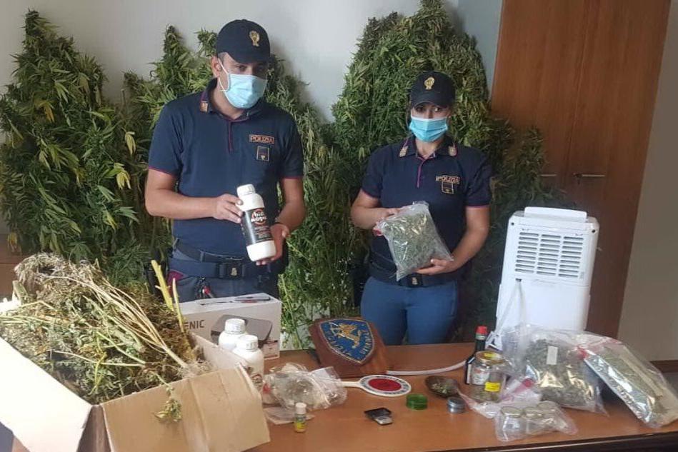 In casa una fabbrica per lavorare la marijuana: 34enne nei guai