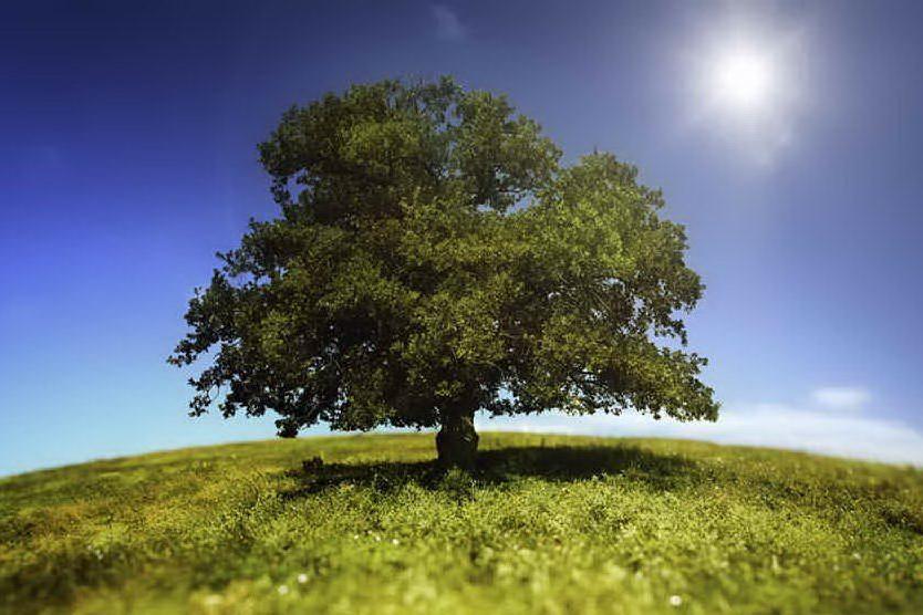 L'idrogeno verde e l'energia del futuro