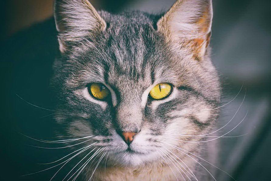 Bimba di nove mesi muore soffocata dal gatto domestico