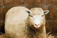 Dolly, la pecora clonata