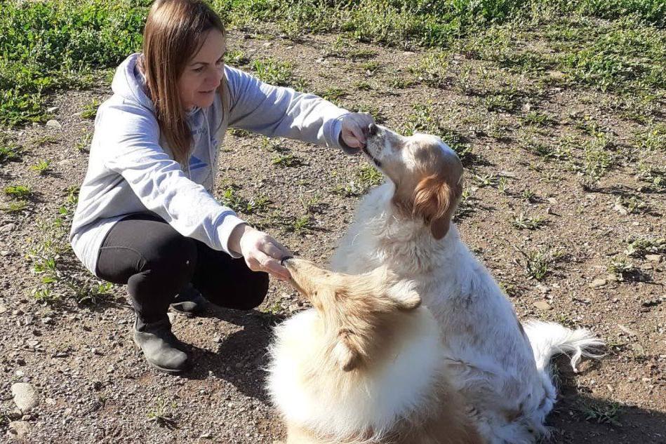 Stress da trasloco: come aiutare i nostri cani?