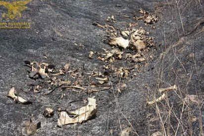 Simaxis, la Forestale scopre una discarica: all'interno carcasse di bovini