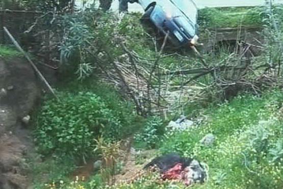 Il cane ucciso