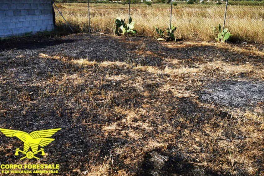L'area incendiata (foto Corpo forestale)