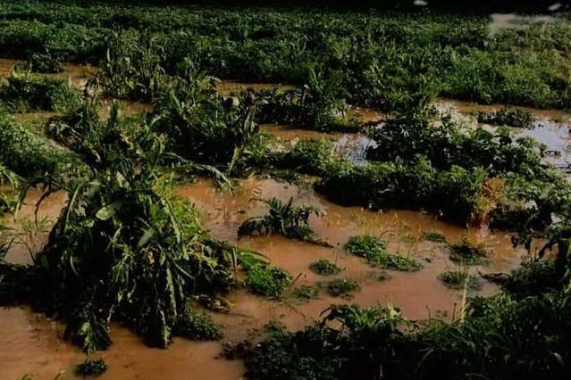 Maltempo, nubifragi in Sardegna: danni all'agricoltura
