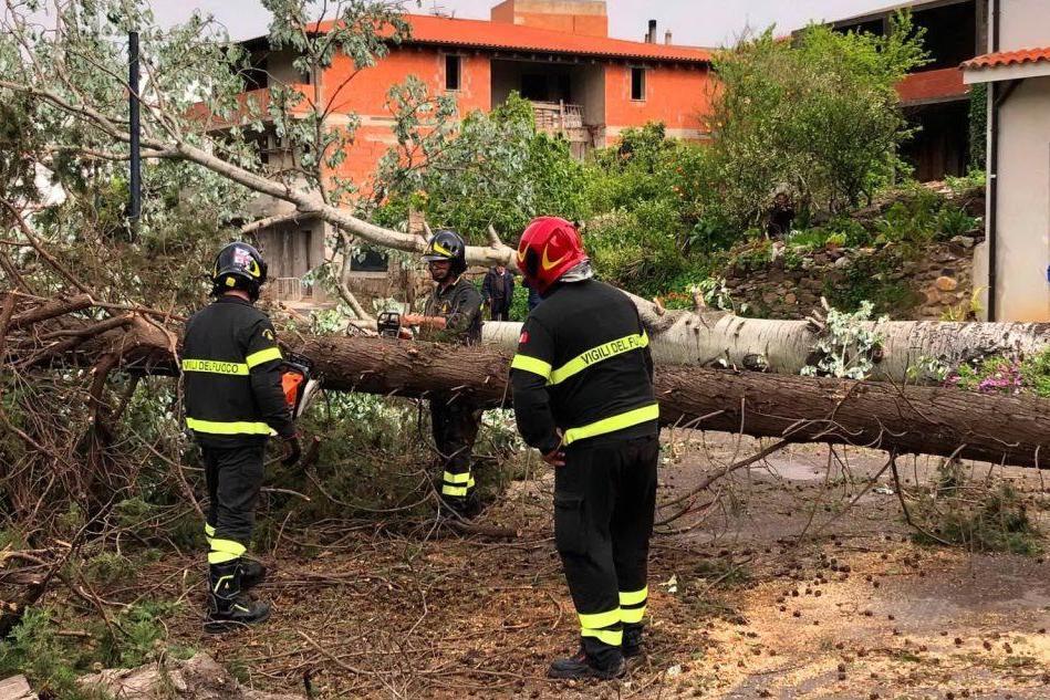 Fluminimaggiore, alberi caduti e danni per il maltempo