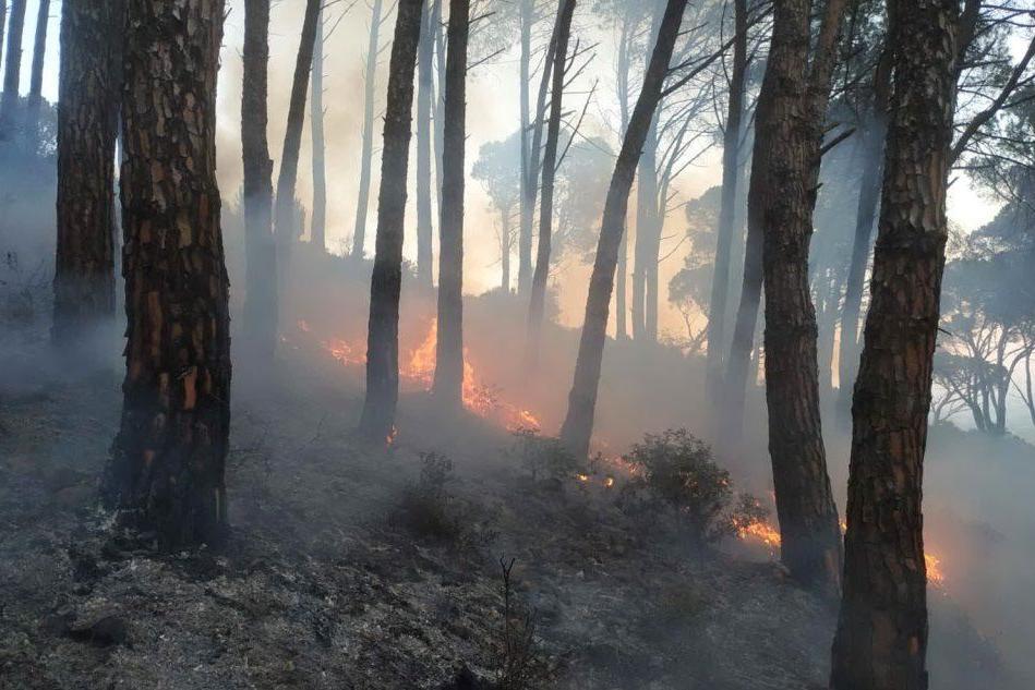 """Le fiamme aggrediscono la pineta di Villacidro: """"Gli aghi di pino come benzina"""""""