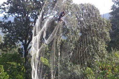 Bracconaggio nel Sud Sardegna: smantellate decine di trappole