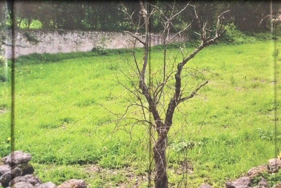 Cagliari, un giardino involontario nell'orto dei capuccini